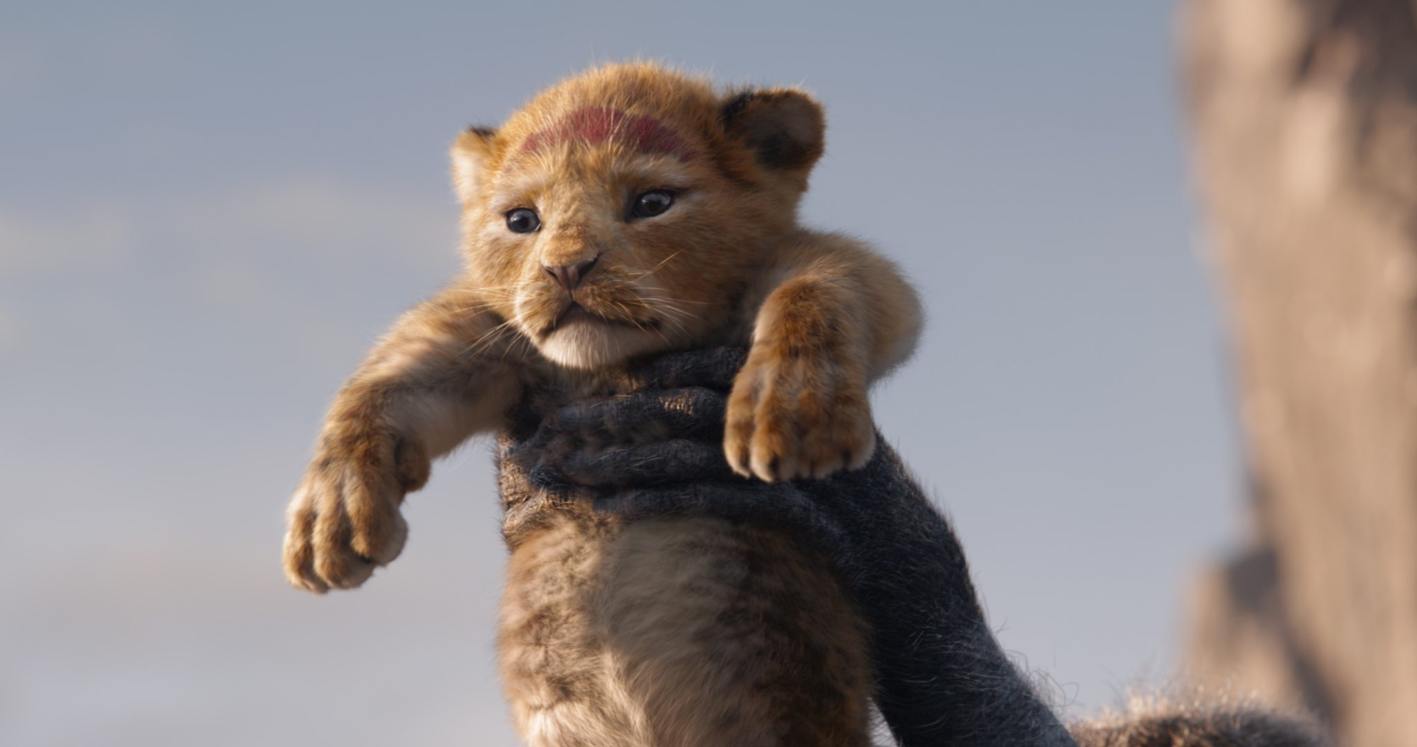 The Lion King. © 2019 Walt Disney Studios. All rights reserved. VFX by MPC Film